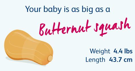 File:2917 Size of Uterus Throughout Pregnancy-02.jpg