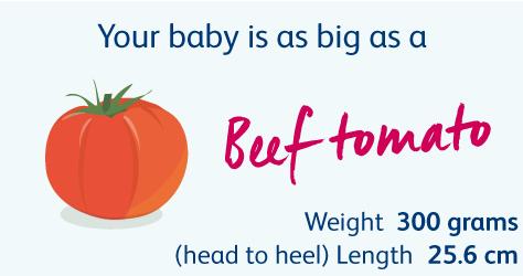 20 Weeks Pregnant | Your Pregnancy Week by Week | Bounty