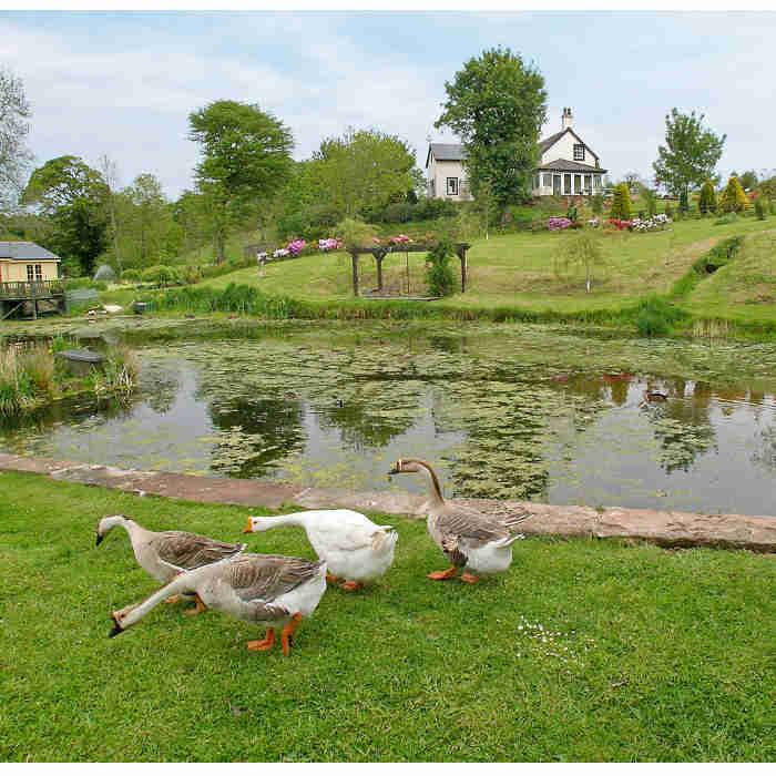 cottages-lake-image