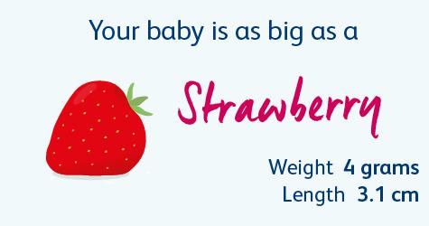 10 Weeks Pregnant | Your Pregnancy Week-by-Week | Bounty