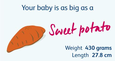 22 Weeks Pregnant | Your Pregnancy Week-by-Week | Bounty