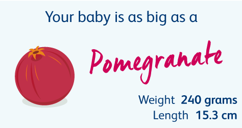 19 Weeks Pregnant | Your Pregnancy Week-by-Week | Bounty