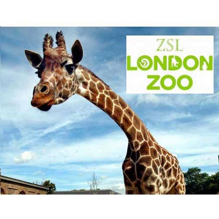 attractiontix-londonzoo