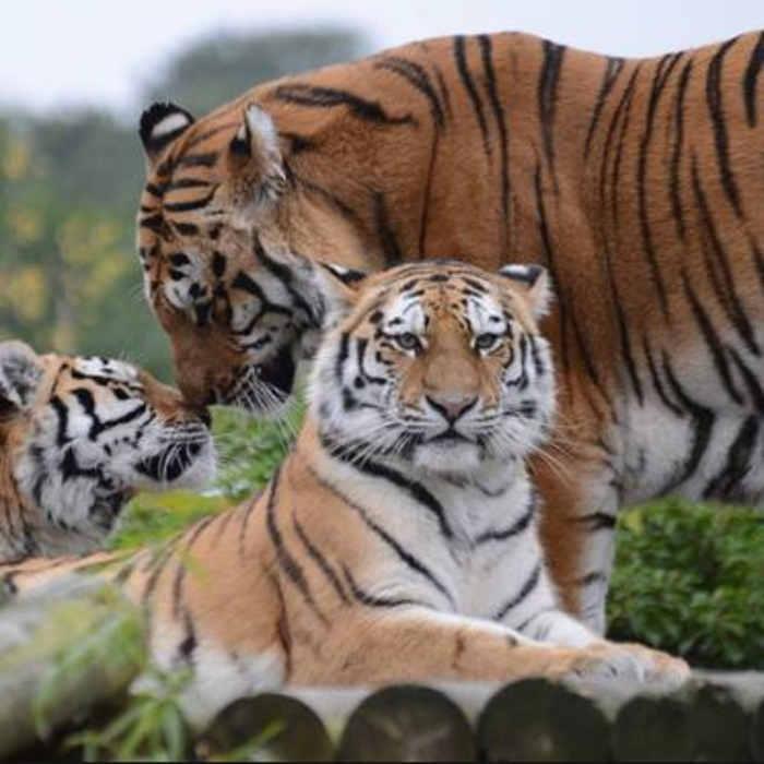 Paradise-wildlife-park